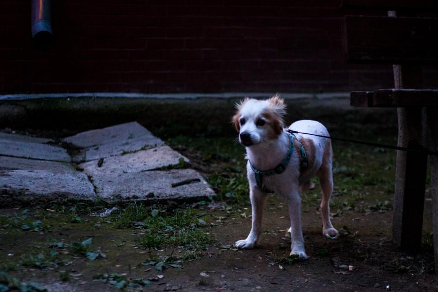 park camp 2015_trebisov_foto_david hanko_web (9)